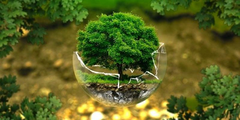 tree in a glass globe to indicate environmental studies